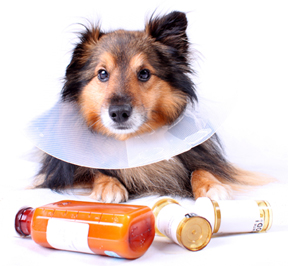 dog with medications
