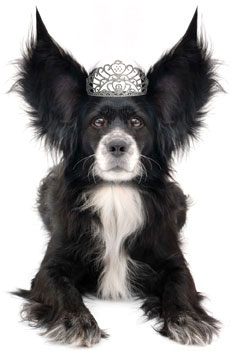 dog with crown